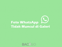 Foto WhatsApp Tidak Muncul di Galeri